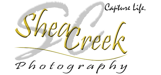 For Your Photography Needs, See My Web Site at