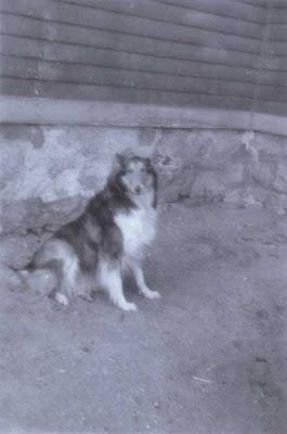 Lassie on Vose St. - circa April 1957