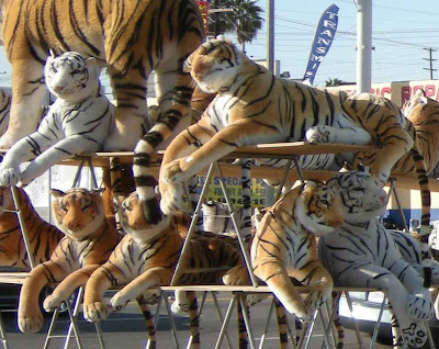 Tigers Spotted in L.A.- Venice & La Brea