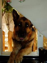 Mi lindo perrito