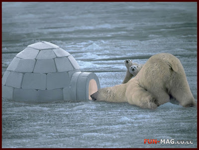 Unexpected Guests, Polar Bears - Animals Wallpaper