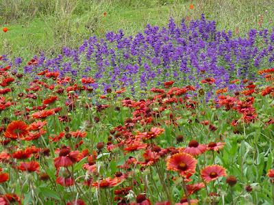Temps de jardin: Fleurs de jardins ou fleurs des champs?