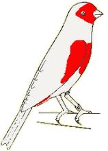 Desenho do canário Mosaico