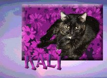 Remembering sweet Kali