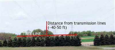 Photograph detailing the height of the tree line in relation to the transmission lines