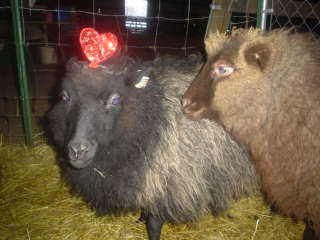 [sheep+308.JPE]