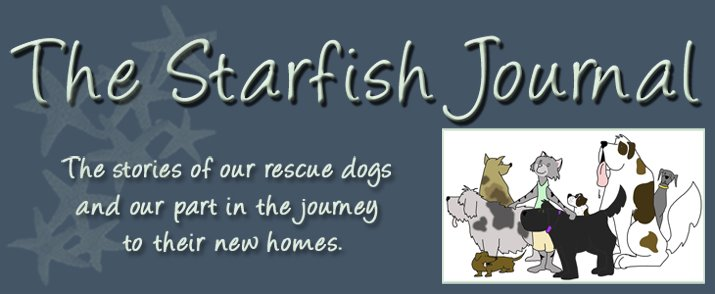 The Starfish Journal