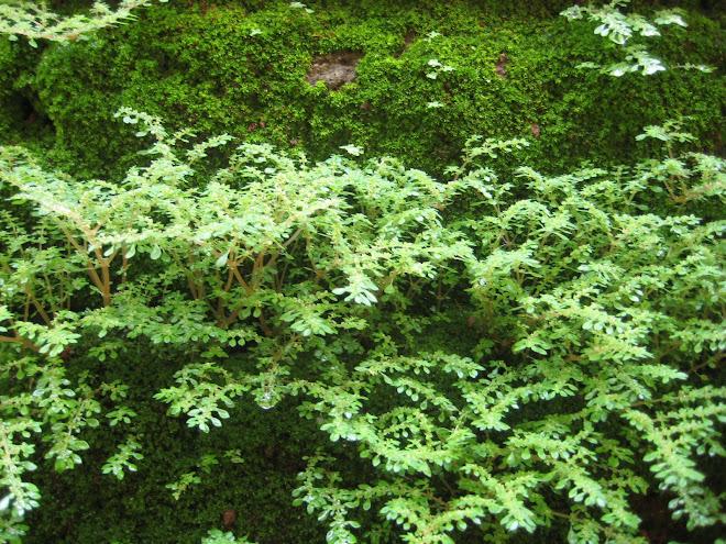 Micro Floresta