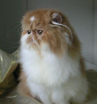 ... kucing yang belum tentu membawa manfaat terhadap ek