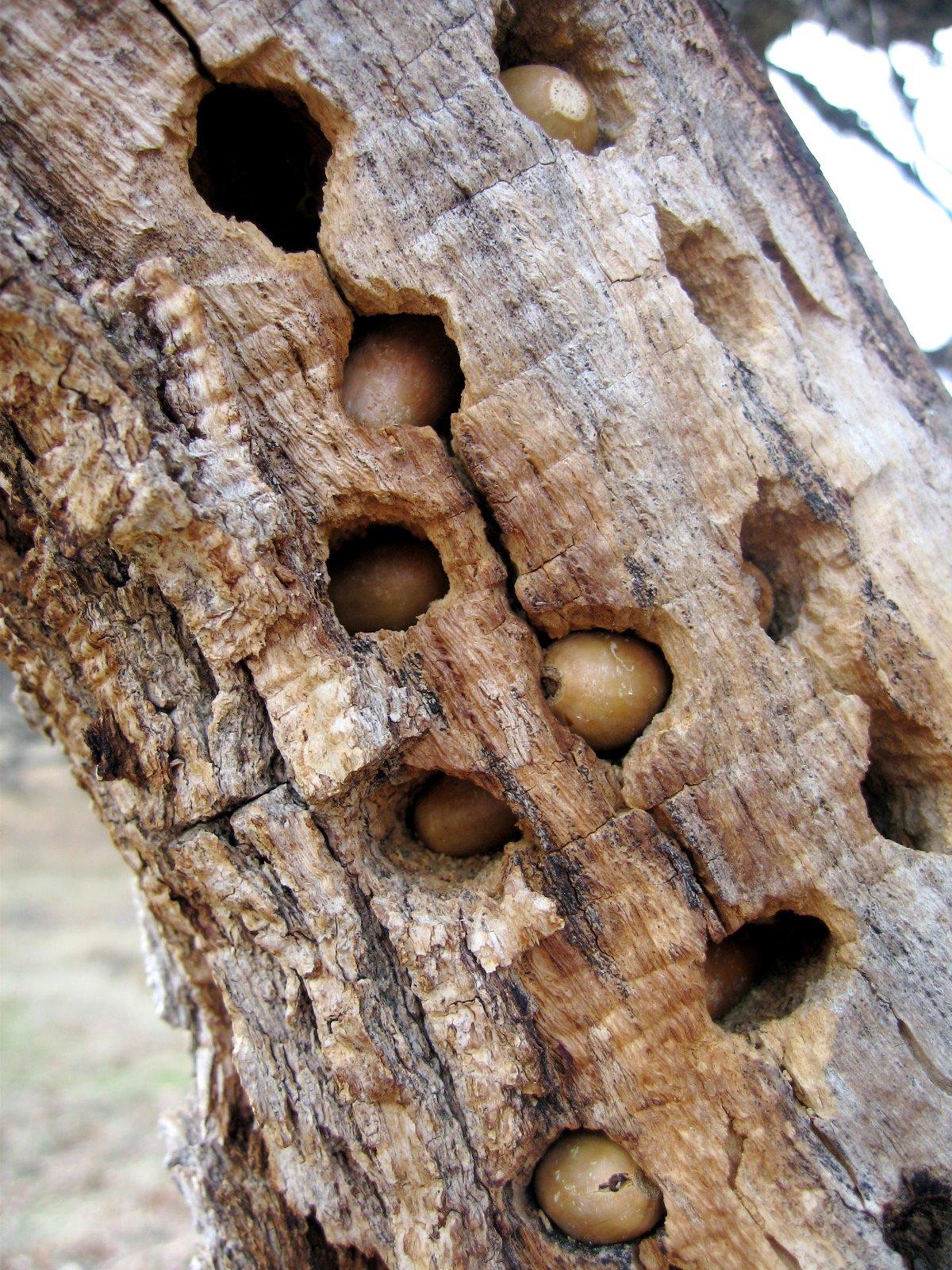 [acorns+]