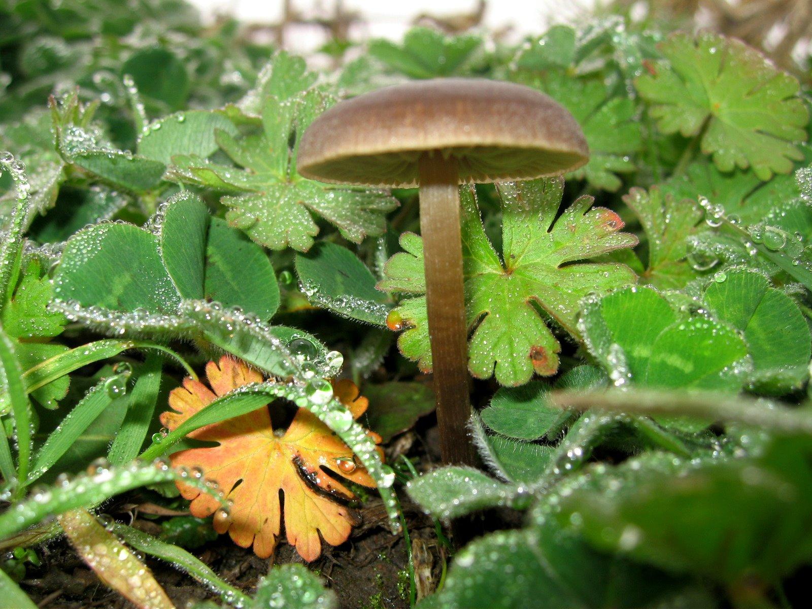 [br+mushroom]