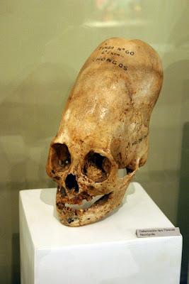 [Image: skull.jpg]