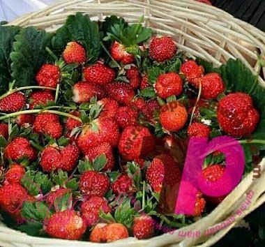 Khasiat buah strawberi | Koleksi PETUA Tradisional, tips, information of MALAYSIA