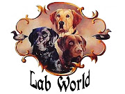 Blog Lab World Canil