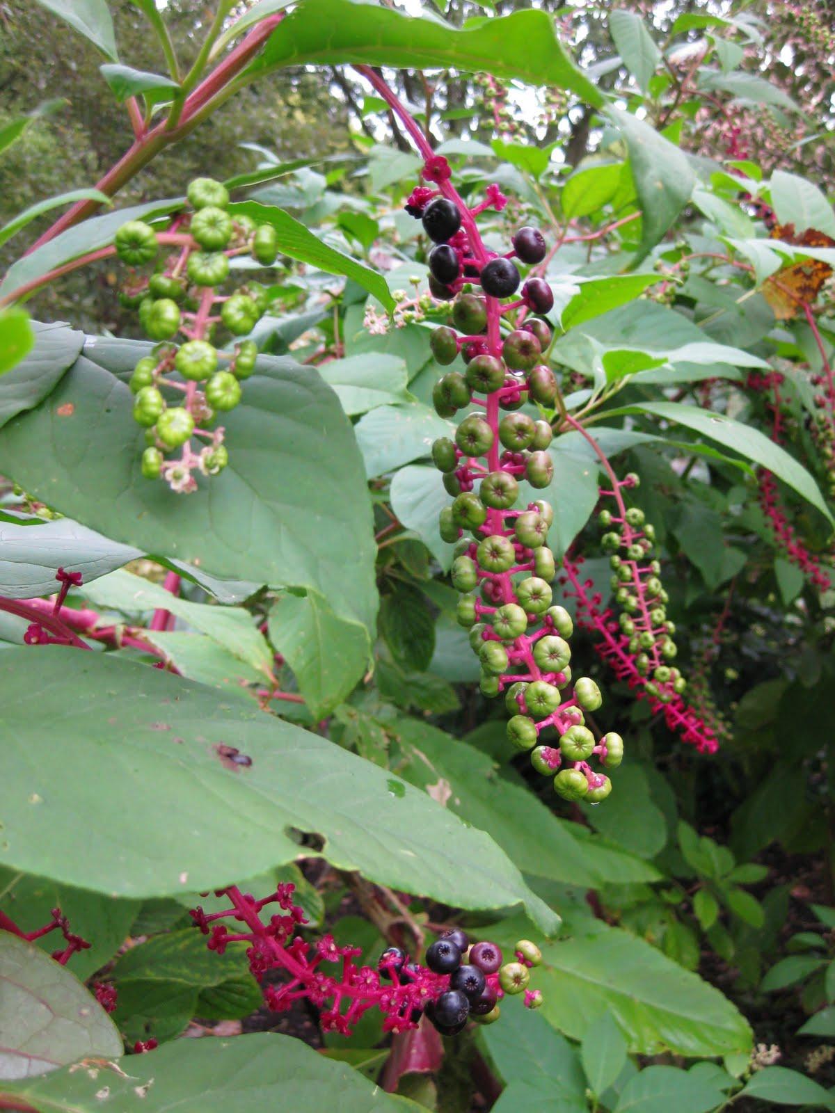 Rotary Botanical Gardens - Hort Blog: Our Spirits Weren't ...