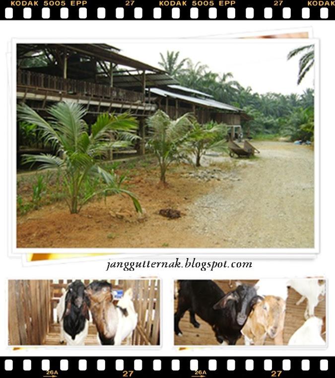 JANGGUT TERNAK FARM (SA0076716-W)