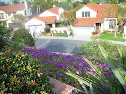2010 - California