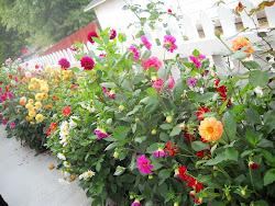 Flowers - 2010