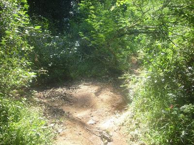 trekking no Morro Santana em Porto Alegre, RS