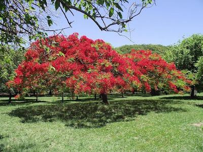 Brazilian spring