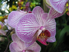 Orchids in Bloom at Franklin Park