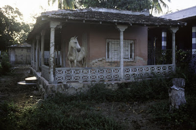 Horse on Porch