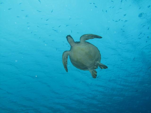Cruising On Sy Sooke Palau Diving