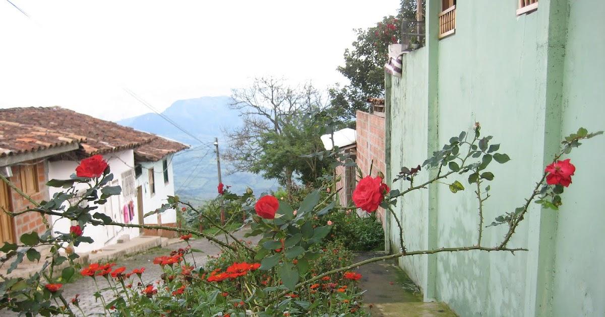 Proyecto de plantas ornamentales rosa for Modelo de proyecto de plantas ornamentales