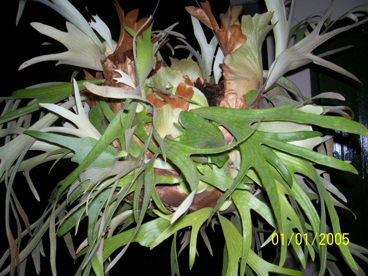 proyecto de plantas ornamentales cuerno