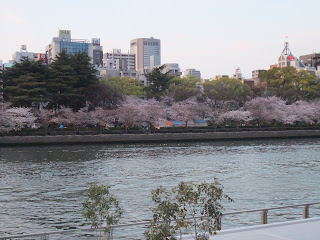 八軒家浜からの桜並木の風景写真