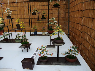 大阪城の菊花展の菊盆