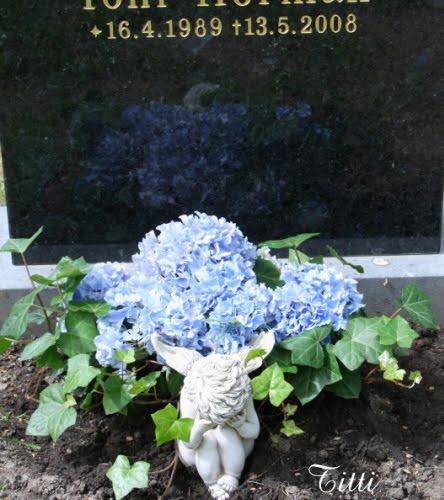 Hortensia haudalle