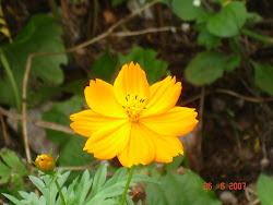 Flor silvestre - Cerro Corá/RN