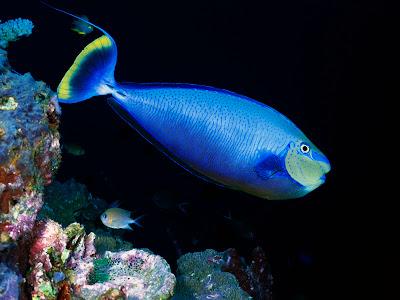 Amazing Desktop Wallpaper Underwater Creatures Wallpapers