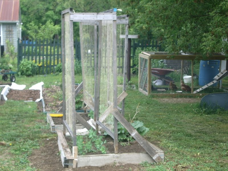 Sweet Pea Trellis Ideas Part - 38: 15 Ideas Of DIY Pea Trellis
