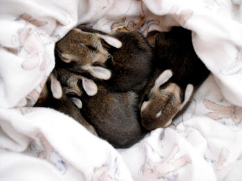 OH MY GOD BABY RABBITS!
