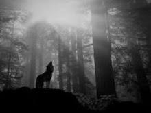 aulla, lobo, aulla, calma tu dolor