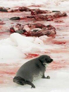 http://1.bp.blogspot.com/_rCpEAOcHLgU/Se-RMyRAlSI/AAAAAAAAAB0/pdECGwBZEmM/s320/matanza-de-focas.jpg