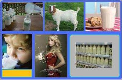 Manfaat-dan-Kasiat-Susu-Kambing-ettawa-untuk-kesehatan
