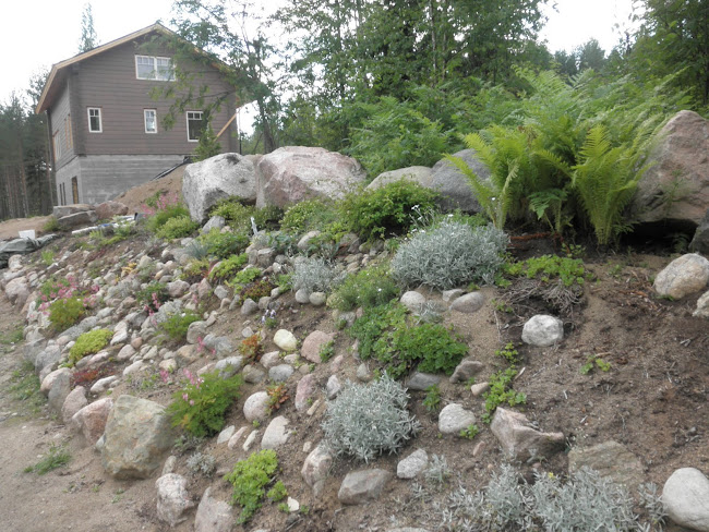Viime syksynä perustettu kivikkoreunus kukkii suht hyvin:D