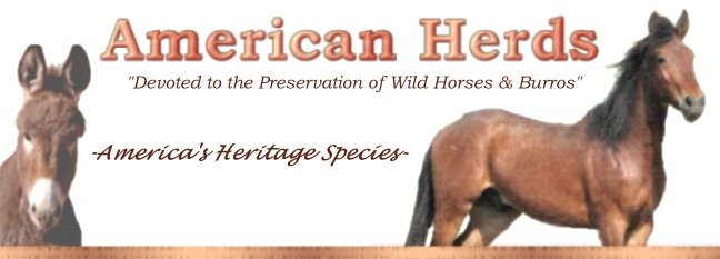 American Herds Extras