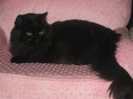 Jasmine...on her throne