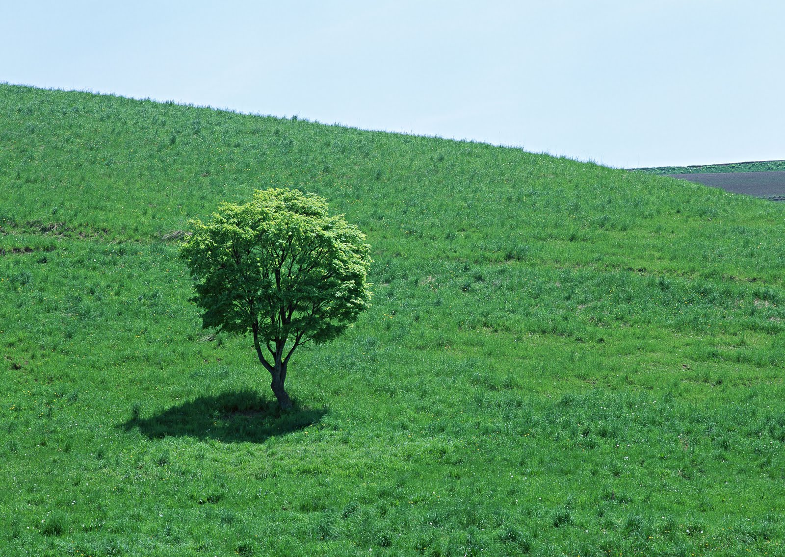 http://1.bp.blogspot.com/_rGZ14Dv3CBU/S92gft8ryAI/AAAAAAAAA-w/FChQLJoiYYI/s1600/Free+Tree+Wallpaper+%2841%29.JPG