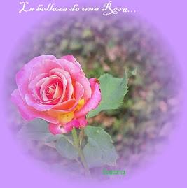 Mi Rosa...en el jardín de la vida...