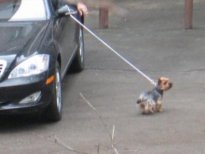 O cumulo da preguiça, levar o cachorro pra passear de carro