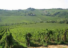 La viticoltura e l'enologia.