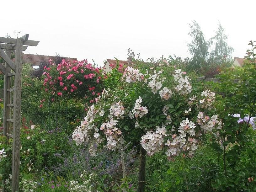 Le jardin de v rone bon samedi for Le jardin d agathe 19