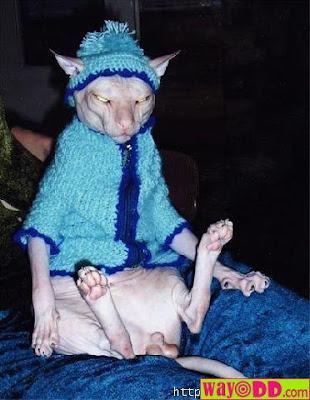 http://1.bp.blogspot.com/_rKvAmdl5y-8/Rm-4YHLTT5I/AAAAAAAAAgw/_UrRpR-Pt0w/s400/funny-pictures-really-weird-cat-13o.jpg
