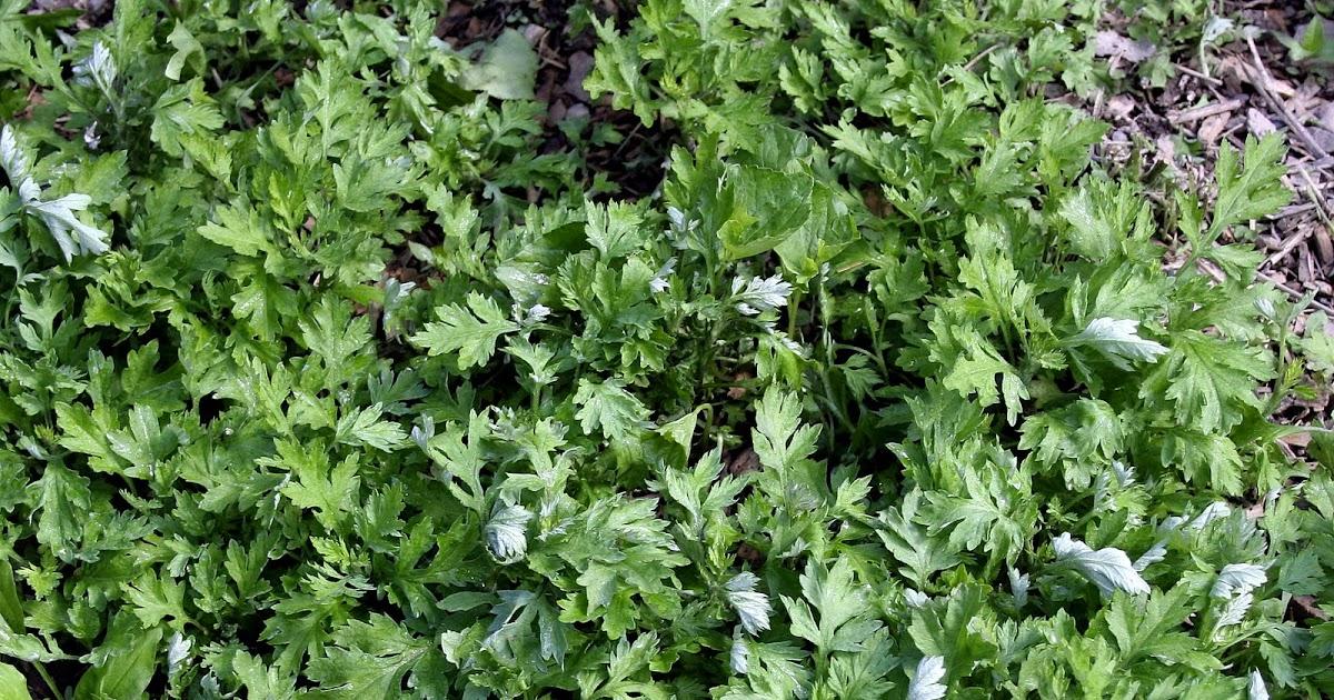 Inside My Secret Garden Day To Day Living At Cairnwood Cottage A Safe Weed Killer