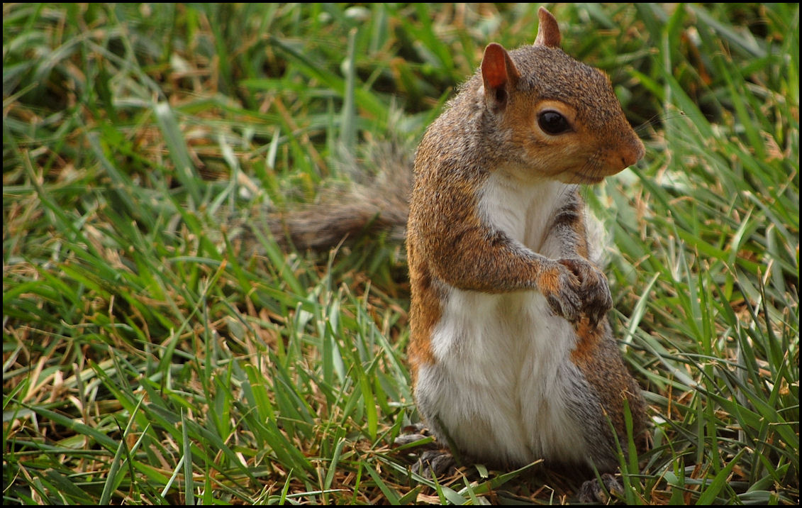 squirrel dating site To be clear, we do not recommend, encourage or condone juggling hibernating squirrels, it's just interesting to note, scientifically speaking, that one could (if one was a budding squirrel .